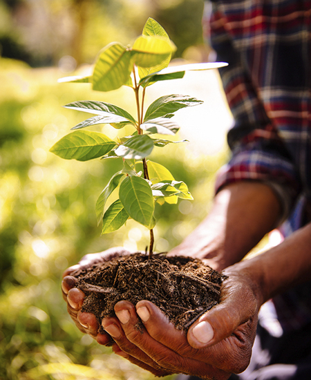 Hands full of fresh soil to plant a new sapling